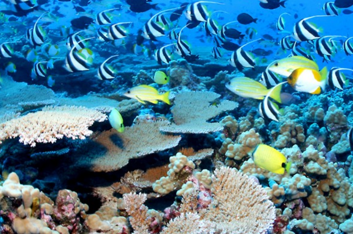 Obama to Create World's Largest Marine Reserve in Hawaii